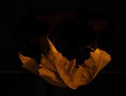 17th Nov 2020 - A leaf