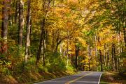 17th Nov 2020 - Road Through Fall