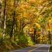 Road Through Fall by photograndma