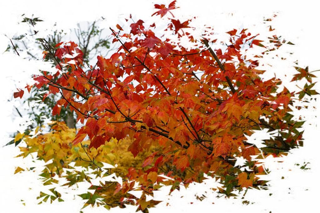 autumn revisited by quietpurplehaze