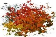 17th Nov 2020 - autumn revisited