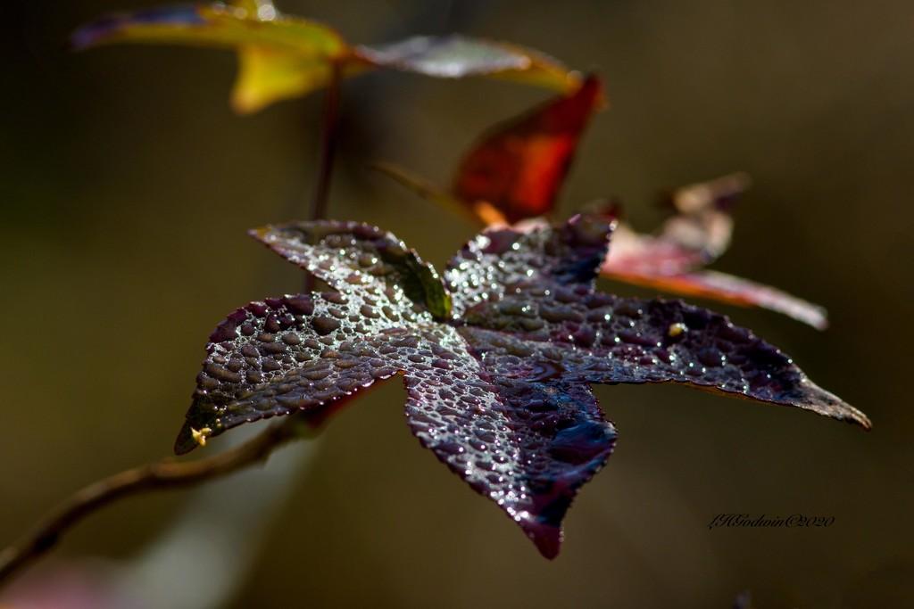 LHG-4726-Leaves in November by rontu