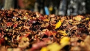 17th Nov 2020 - Autumn