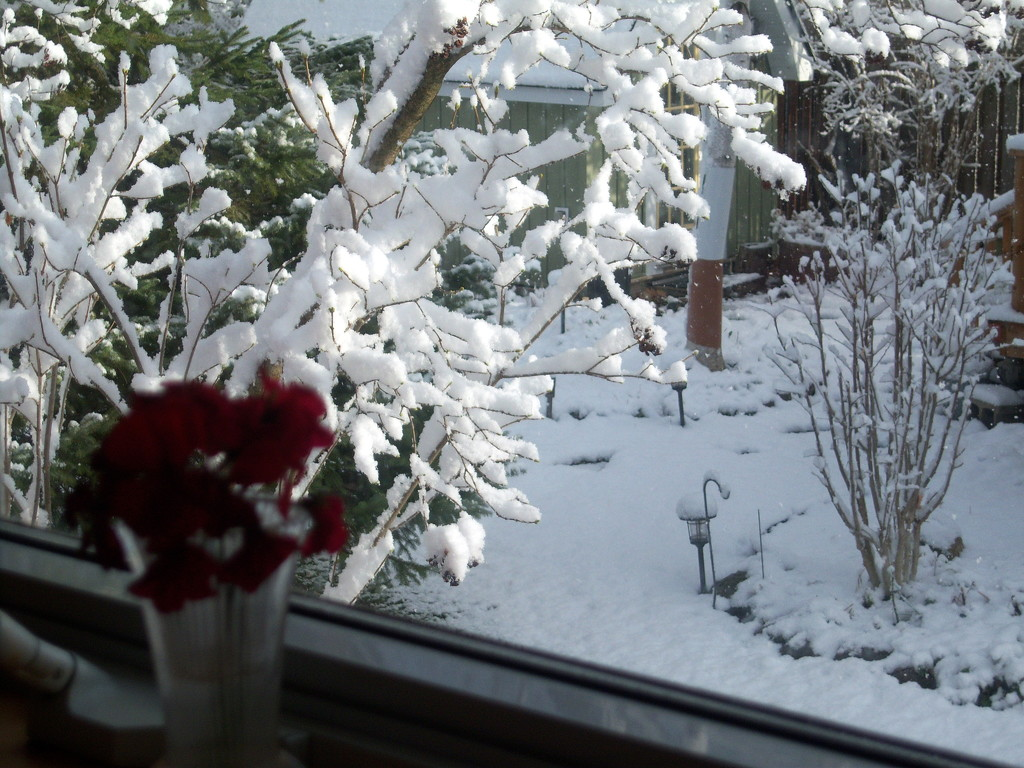 From my kitchen window - first snow by bruni