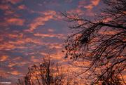 17th Nov 2020 - Sunrise 1