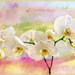 Orchids in pastels