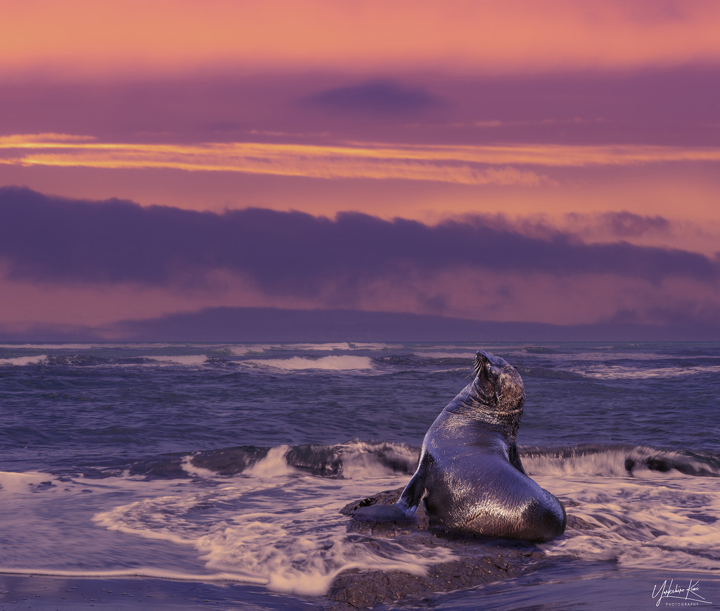 Seal Composite by yorkshirekiwi