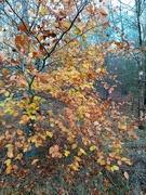 18th Nov 2020 - Woodland Walk