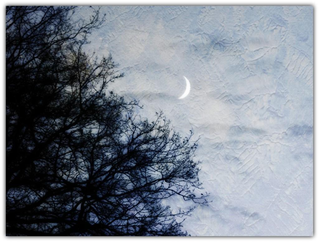 Bad Moon Rising? by ajisaac