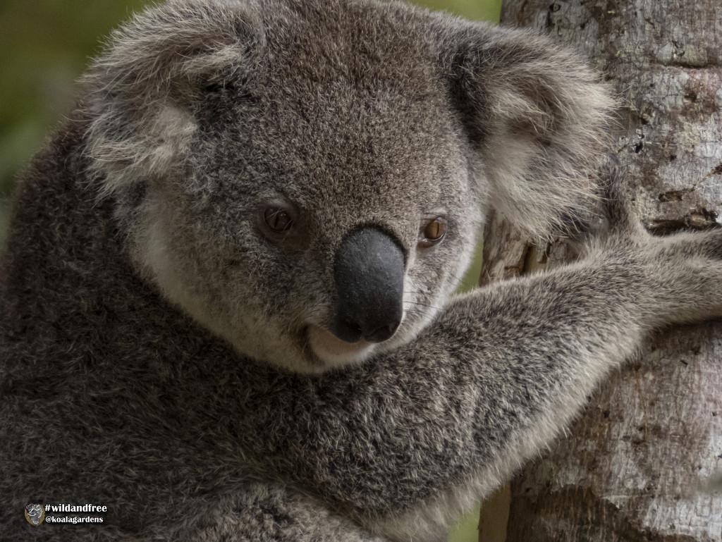 Matilda by koalagardens