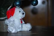 18th Nov 2020 - holiday bear