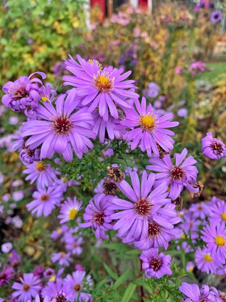 Purple flowers.  by cocobella