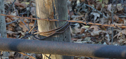 18th Nov 2020 - Barbwire and rust