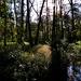 Swamps get a bad rap