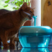 Shhhh, look who is sipping from her fountain...