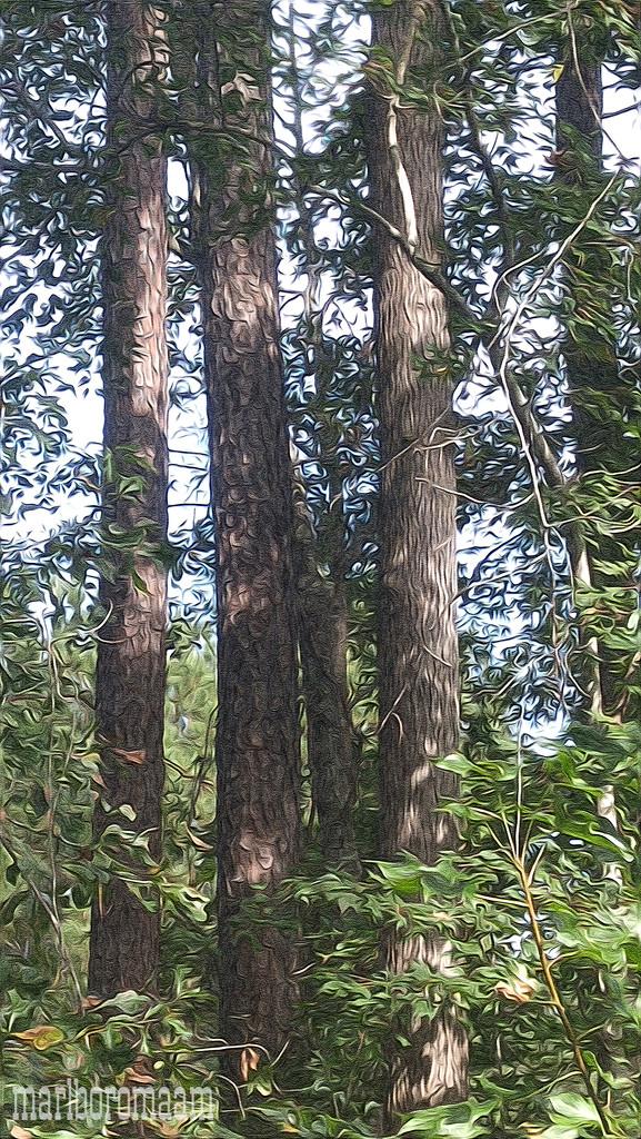 Painted loblolly pine and sweetgum tree trunks... by marlboromaam