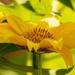 Yellow Flower!