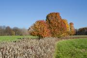 18th Nov 2020 - Trespassing for Fall Color