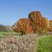 Trespassing for Fall Color