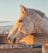 17th Nov 2020 - sunset horse