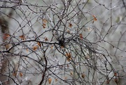 19th Nov 2020 - Witches' Broom