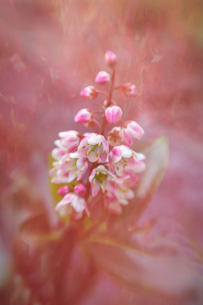 In pink by gosia