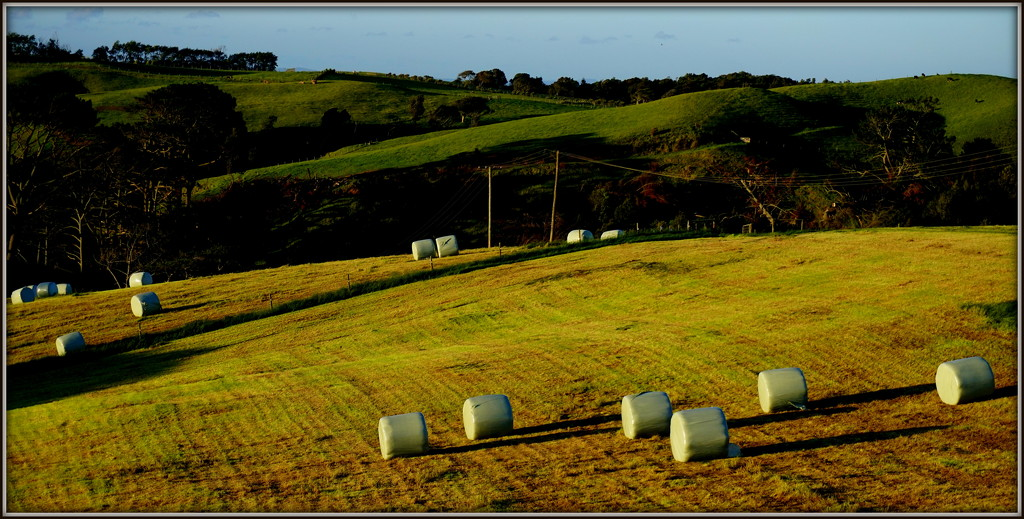 More silage by dide