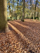 18th Nov 2020 - Great plunging with my feet into the FALLen leaves