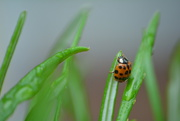 19th Nov 2020 - Ladybird.........