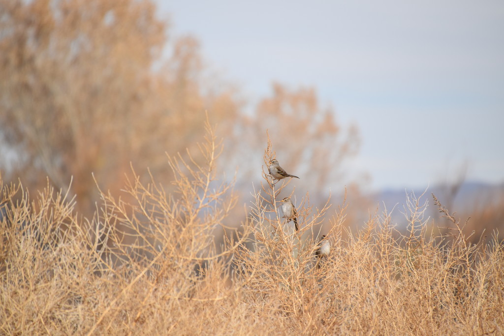 Little Birds. by bigdad