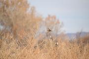 19th Nov 2020 - Little Birds.