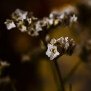 19th Nov 2020 - More flowers