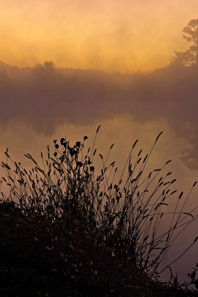 LHG-4520- morning fog by rontu