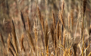 19th Nov 2020 - Ornamental grass