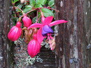 19th Nov 2020 - November's Blooms and Buds