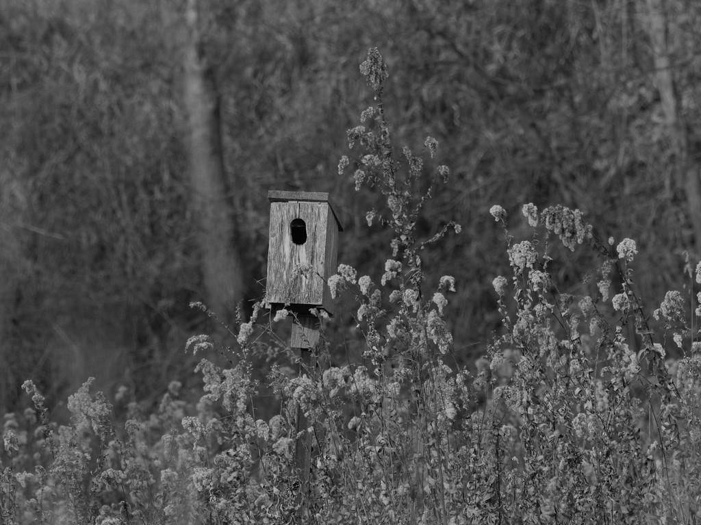 birdhouse by rminer