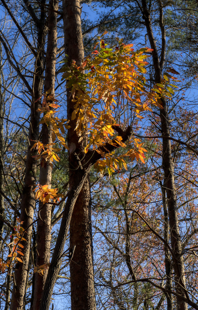 Fall Colors  by kvphoto