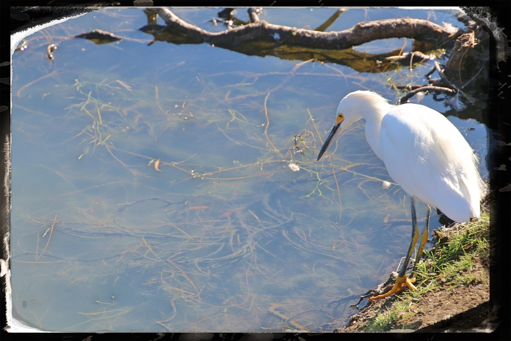 At Santee Lakes by kathyboyles