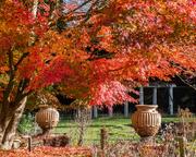 19th Nov 2020 - The garden at Sandy
