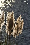 18th Nov 2020 - Sun-rimmed fluff