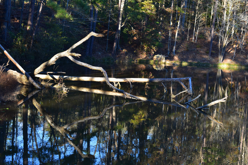Tree reflections by homeschoolmom