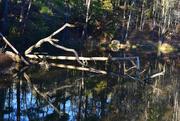 18th Nov 2020 - Tree reflections
