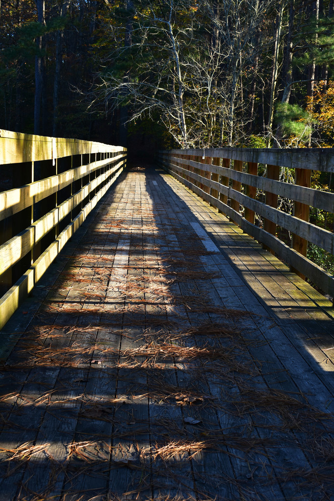 Long shadows from the sitting sun by homeschoolmom