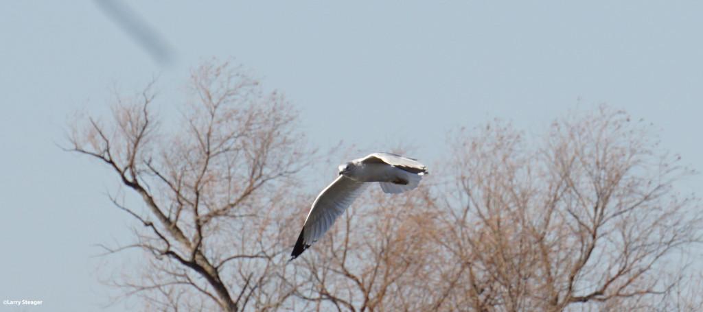 Ride the wind by larrysphotos