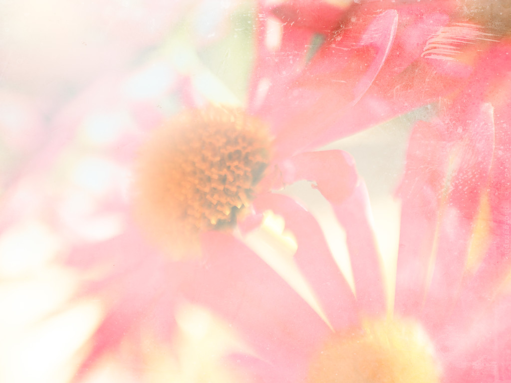 soft and light by pistache