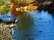 19th Nov 2020 - Morning Dip in the Pond