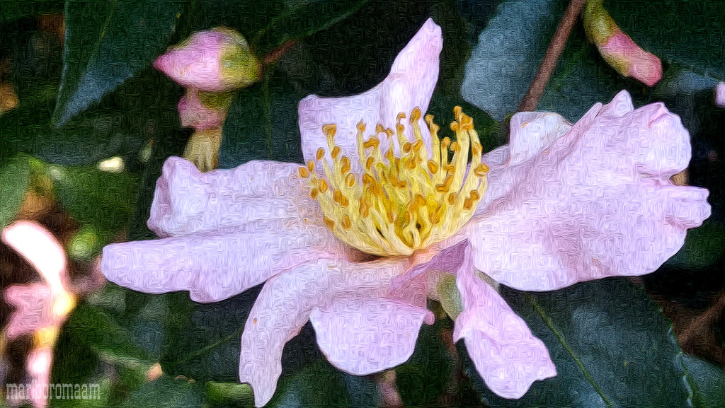Painted pink camellia... by marlboromaam