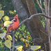 Cardinal and Leaves