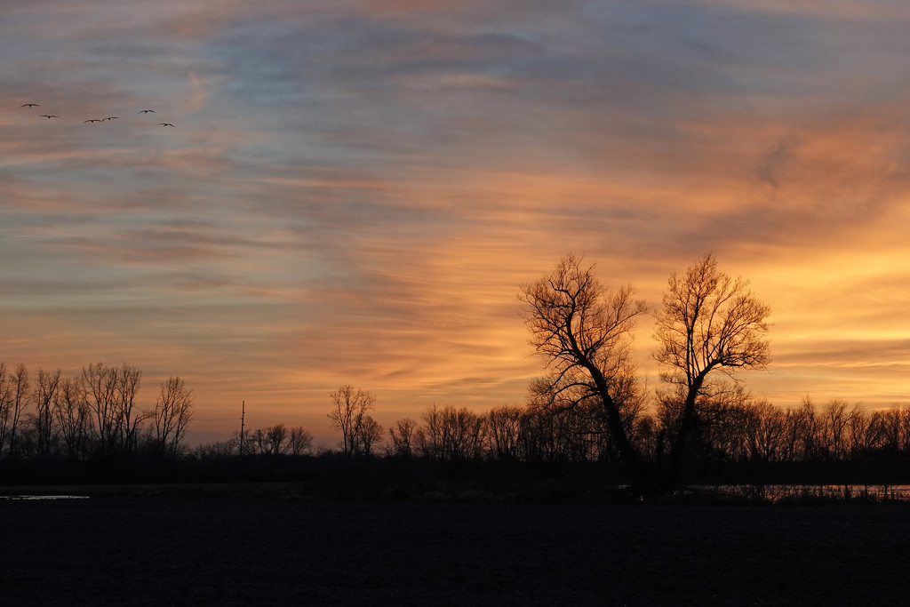 Cranes at Sunset by annepann