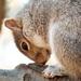 Downward Facing Squirrel